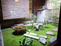 small space Japanese moss garden