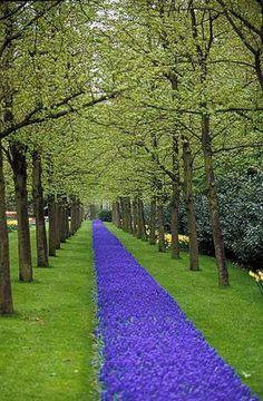 #Amsterdam Tulip Museum