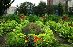 This kitchen garden contains 150 heritage and heirloom varieties of  vegetables, edible flowers, culinary and medicinal herbs.  Chicago.  Garden designed by Bill Shores,  who manages Rick Bayless' urban garden/farm.