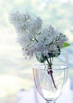Lilac°°