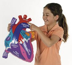 Teach the funtions of the human heart with this fun inflatable model