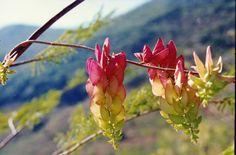 flores aereas silvestres