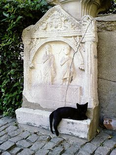 carving in istanbul with black cat by downtempo, via Flickr