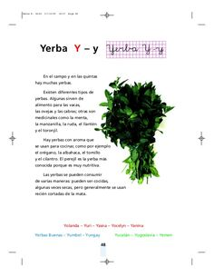 Método matte Herbs, Different Types Of, Herb, Medicinal Plants