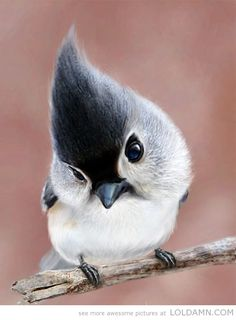 What an awesome bird!!!