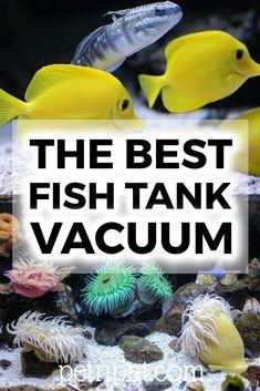 The Best Fish Tank Vacuum – How To Siphon & Clean Fish Tank Gravel  #fish #fishtank #aquarium #tropicalfish #pets #animals #tank Animal Quotes, Animal Memes, Aquarium Design, Aquarium Ideas, Fish Tank Themes, Cleaning Fish, Cleaning Hacks, Fish Tank Gravel, Fish Tank Stand