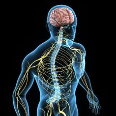 There are two main components of the nervous system: The brain and the spinal cord. When these are combined, this… Chronic Fatigue Syndrome, Chronic Illness, Chronic Pain, Nerves Of The Body, Low Vitamin B12, Vit B12, Vitamine B12, Gastrointestinal Disease, Fibromyalgia Treatment