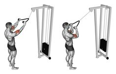 Pulldown exercise the muscles of the biceps. Pulldown exercise the muscles of the biceps. Exercising for bodybuilding Target muscles are marked in stock illustration Best Biceps, Biceps And Triceps, Back And Biceps, Forearm Workout, Biceps Workout, Gym Workouts, Muscle Fitness, Mens Fitness, Muscle Food