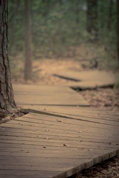 Caminho entre árvores.