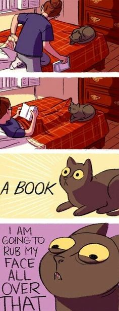 Cat humor. Yes. And put his butt on it and lay down. Lucky knows this trick.