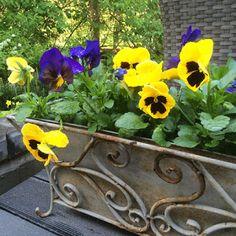 Äiti yrittää: Kesäterassin kukkaloistoa - Pukinmäen Puutarha on keidas, puutarha, puutarhanhoito, gardening, terassi, terrace, summer, kesä, flower, kukka, kukkia, flowers