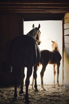 horse and colt - animal photography