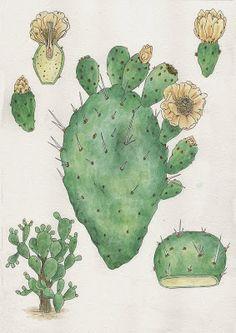Funcion estetica e informativa, como decorar el cactus pa pincharte mas.