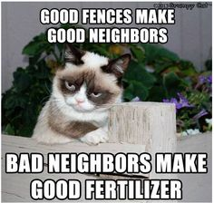 Grumpy Cat for the win