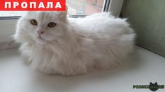 Пропал кот белый пушистый г.Екатеринбург http://poiskzoo.ru/board/read31015.html  POISKZOO.RU/31015 Потерялся кот белый пушистый, глаза желто-зеленые. Крупный до .. кг, возраст .. года  РЕПОСТ! @POISKZOO2 #POISKZOO.RU #Пропала #кошка #Пропала_кошка #ПропалаКошка #Екатеринбург