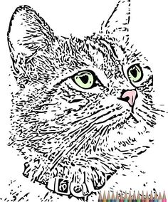 Adult Coloring Pages Cat PagesInstant Download Printable Art