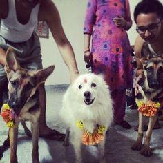 Es básicamente el mejor día de mi vida porque celebra uno de los mejores seres de la tierra: los perros!   18 Outrageously Cute Photos Of Dogs Being Celebrated At Nepal's Wonderful Dog Festival