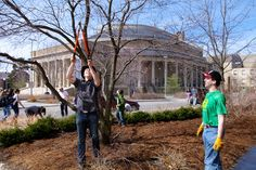 """A definite sign of spring: Students in Professor Nina Bassuk and Peter Trowbridge's horticulture/landscape architecture class, Creating the Urban Eden, prune trees and clean up gardens outside Kennedy Hall. The students maintain legacy gardens created by previous classes of students each year and also design and install their own; there are now more than a dozen """"learning landscapes"""" like this on campus, mostly around the Ag Quad."""