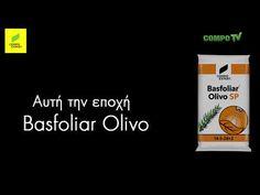 Basfoliar Olivo στην καλλιέργεια της Ελιάς (Compo Expert 2017) - YouTube