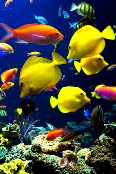 A Tropical fish ecosytem.I love tropical fish because I love the many colors of fish there are.: