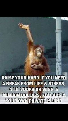 Top 60 Funny Memes And Hilarious Sayings 50 - Funny Monkeys - Funny Monkeys meme - - Top 60 Funny Memes And Hilarious Sayings 50 The post Top 60 Funny Memes And Hilarious Sayings 50 appeared first on Gag Dad. Work Quotes, Great Quotes, Life Quotes, Inspirational Quotes, Funny Signs, Funny Jokes, Hilarious Sayings, Funny Monkey Memes, Monkey Humor