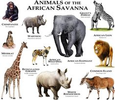 African Savanna Animals, African Wild Dog, African Elephant, Animals Of The World, Animals And Pets, Strange Animals, Rare Animals, Unique Animals, Animals Images