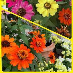 すっかり秋ですね。 中秋の名月も綺麗でした。 エントランスのお花を秋らしいコスモス他、ガーデニング入れ替えしました。 ・金魚草 ・なでしこ ・黄花コスモス ・ジニアプロフュージョン 秋のお花を眺めて、ご来店してくださいね。お待ちしております。 #浜松#西区#舞阪#弁天島#美容院#ビューティ_ヌーン#カット#カラー#パーマ#トリートメント#フェイシャルエステ#ヘッドスパ#メイク#着付け Plants, Beauty, Plant, Beauty Illustration, Planets