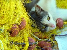 Cat and fishnets, Kythnos island, Greece Pretty Cats, Beautiful Cats, Cute Cats, Pretty Kitty, Like A Cat, Baby Cats, Cat Life, Animal Pictures, Cat Lovers