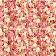 The Wedding of My Dreams - Soft Pink Freeze Dried Delphinium Petals 10 cones 1095 Pink Wedding Decorations, Wedding Themes, Wedding Ideas, Wedding 2017, Chic Wedding, Wedding Colors, Wedding Flowers, Wedding Planning, Wedding Inspiration