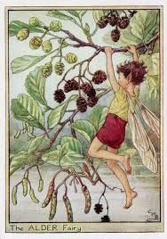 Image result for cicely barker flower fairies