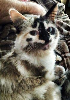 Beautifully Unique Cat
