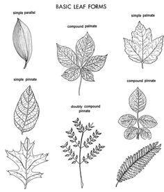 identifying trees - Google Search