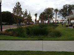Kissimmee Lakefront Park.  Innovative storm water basin - Rain Garden