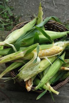 There is nothing like fresh picked corn in the summer