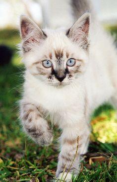 Gorgeous kitten