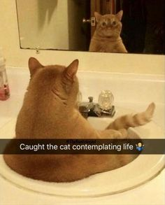 Funny Animals Of The Day 23 Photos