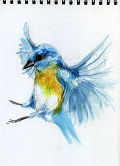 bird watercolour