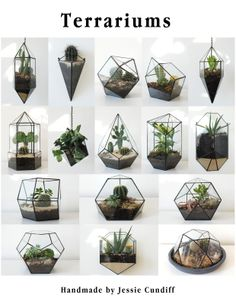 All 16 Terrariums | JESSIE CUNDIFF | http://jessiecundiff.blogspot.com/