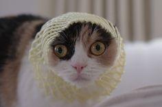 Crochet hat cat! #cat