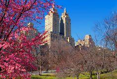 Central Park in spring ... New York City