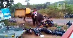osCurve Brasil : Elefante furioso ataca 27 veículos em festival na ...