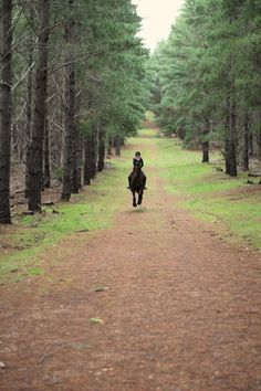 Gallop through the Evergreens
