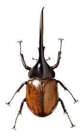 Resultado de imagen para beetle insect
