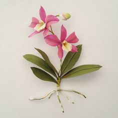 """Waxed Orchid.  We can make one together this Spring @castleintheairshop - the updated class schedule is out ✂🖌✒🌹  ... Also, did you know that 'Orchid' is rooted in the Greek word for """"🏐⚽⚾🏈""""? *chuckle *snort"""
