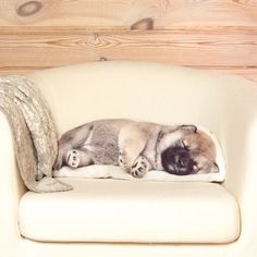 """culturenlifestyle: """" Adorable Animal Pillows by Ivan Ustyakin Russian artist Ivan Ustyakin's deep love of nature and design prompted him to manufacture these adorable, fuzzy pillows. With the help of. Dog Lover Gifts, Dog Lovers, Animal Pillows, Dog Pillows, Sleeping Puppies, Animal Faces, Woodland Creatures, My Tumblr, Shiba Inu"""