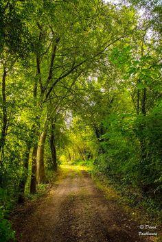 Woodland lane (Meldert, Belgium) by David Vanthienen