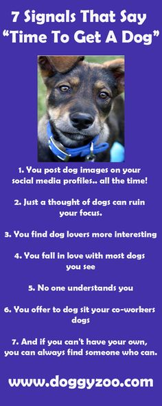 7 Signals That Say Time To Get A Dog