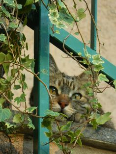 Cute Funny Animals, Cute Cats, Orange And White Cat, Clumping Cat Litter, Curiosity Killed The Cat, Kinds Of Cats, Cat Garden, Pretty Cats, Cat Life