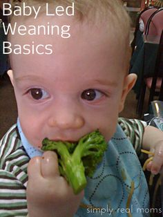Baby Led Weaning Basics | Simply Real Moms