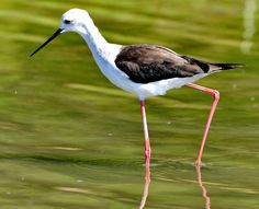 Visit the post for more. Danube Delta, Black Sea, Birdhouses, Eastern Europe, Birds, Country, Places, Animals, Littoral Zone
